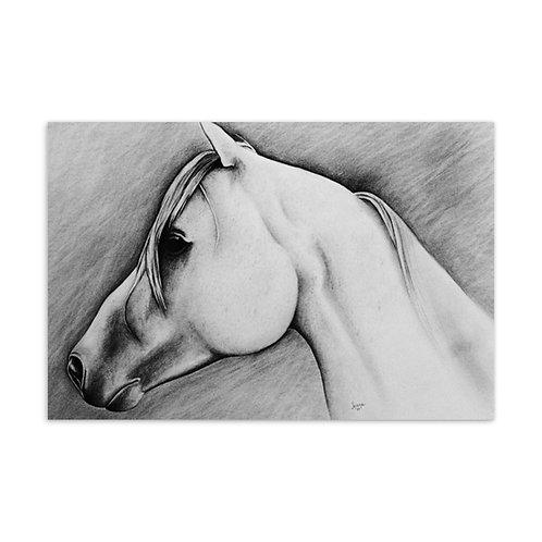 Horse - Standard Postcard