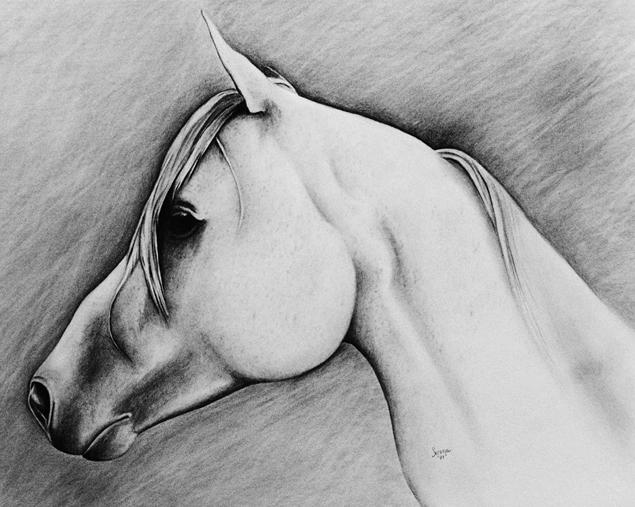 Horse02.jpg