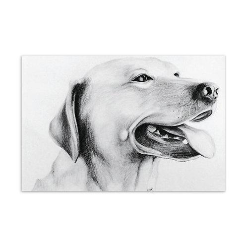 Dog - Standard Postcard
