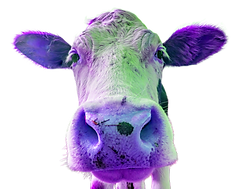 A purple cow (1).png