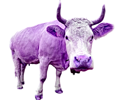A%20purple%20cow_edited.png