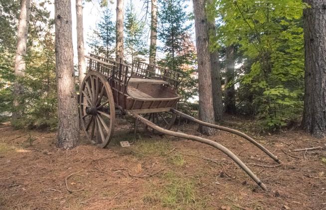 The pine ballad