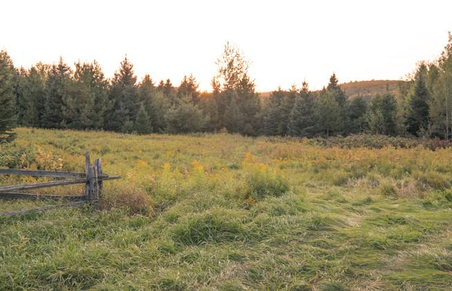 Le champ derrière le village