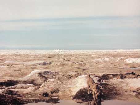 Arctic: Culture and Climate Review - warnings from the Circumpolar North