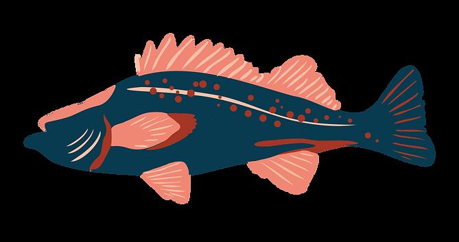 fish-05.png