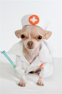 Por que nossos bichinhos precisam tomar vacina?