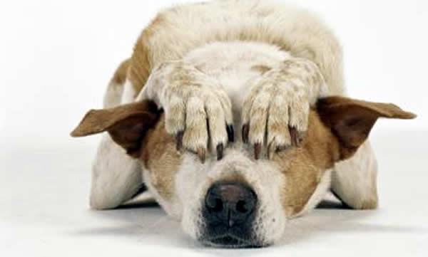 Seu cachorro tem medo de Pet Shop?
