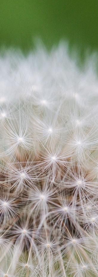 Gestion du stress groupe toulouse cours sophrologie émotions lâcher-prise Détente Relaxation