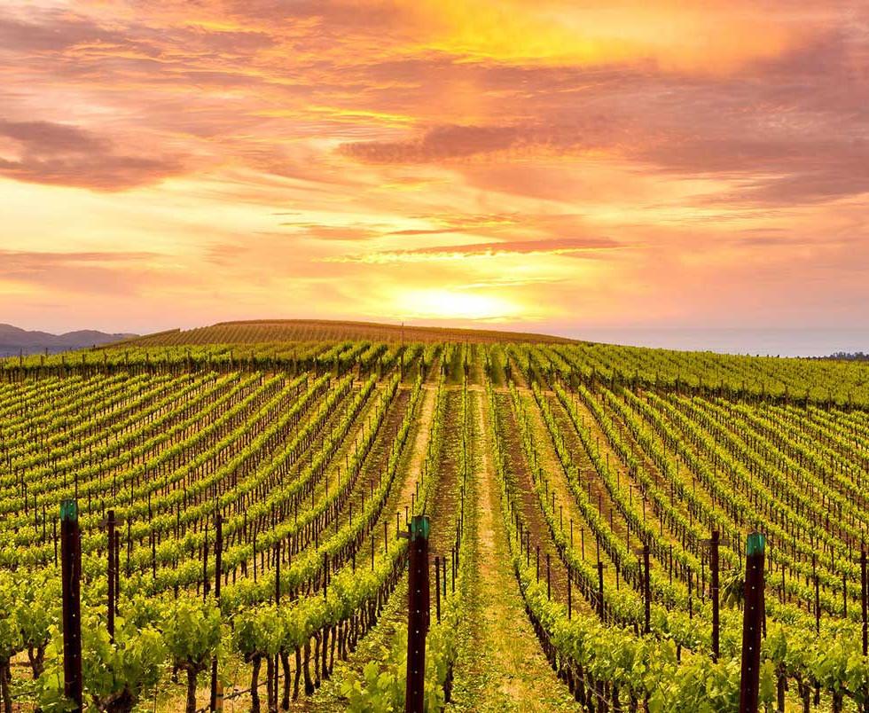 vineyards-hero.jpg