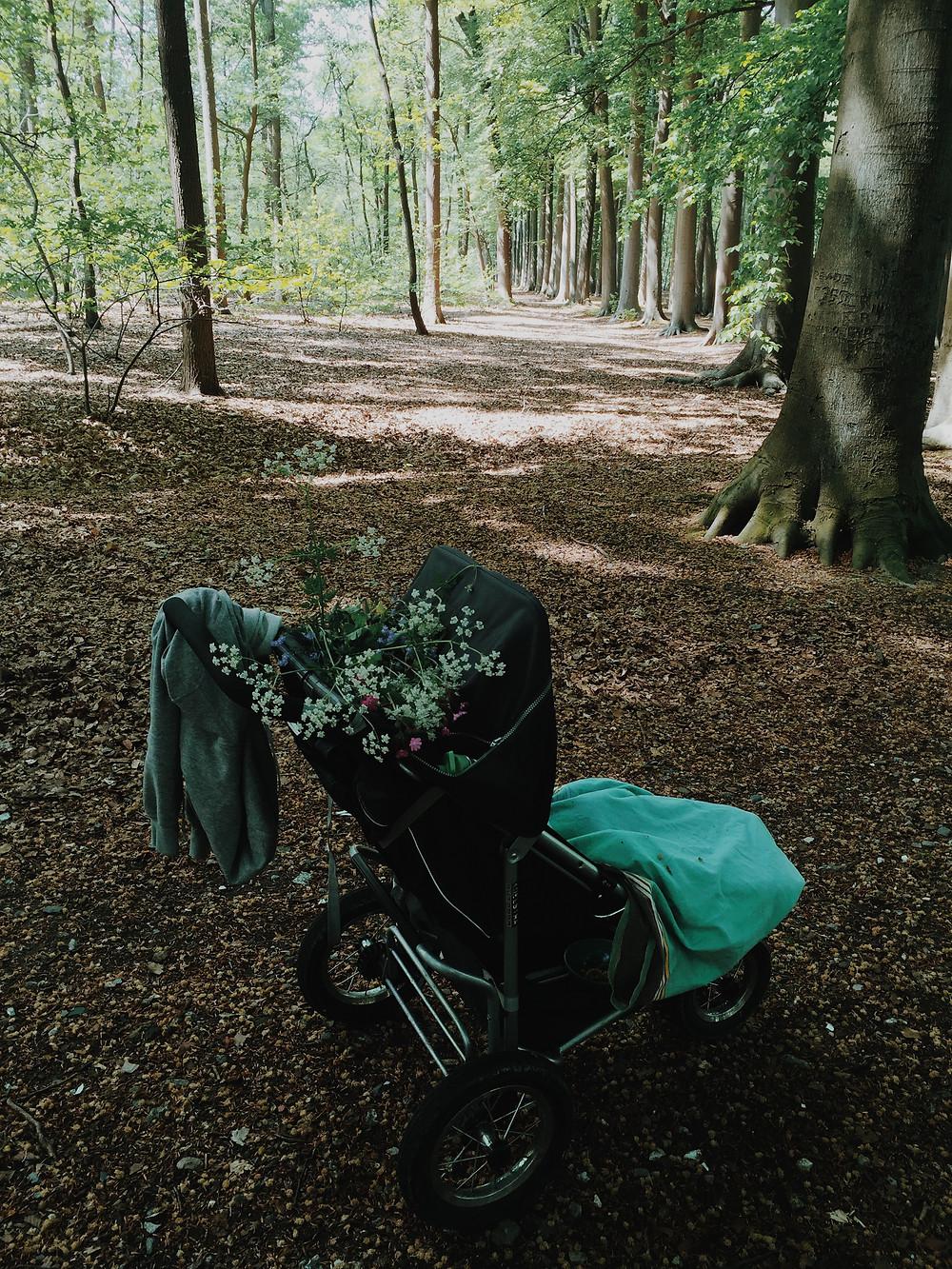 Wandeling lippelo bos