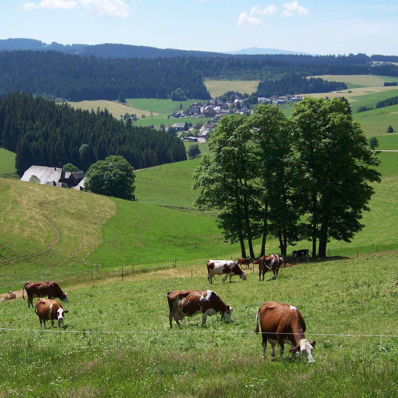 Sommer in Waldau