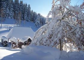 Weiße Weihnachten im Schwarzwald?