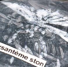 Chrysantème