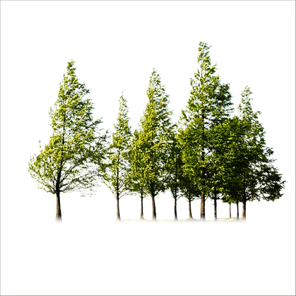 tree-trees-9d8cda58e4821ba89df427fec0b91