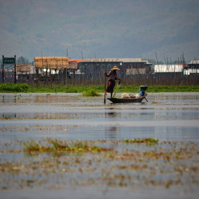 Inle lake fisherman driving his boat wit