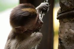 monkey bite