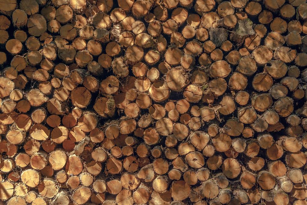 Chucks of wood from logging