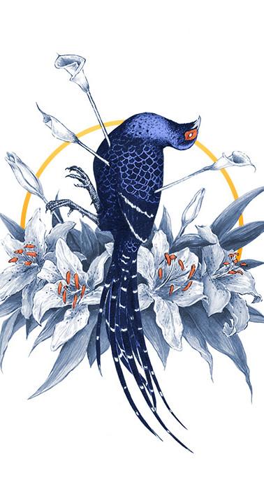 Mikado Pheasant