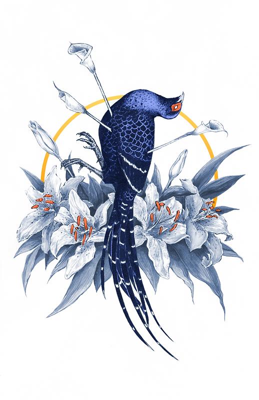 mikado pheasant.png