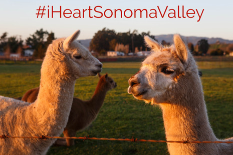 Sonoma is Open: #iHeartSonomaValley