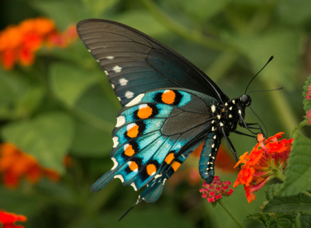 How To Attract Butterflies To Your Home