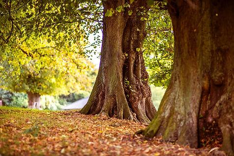 Tree-quote