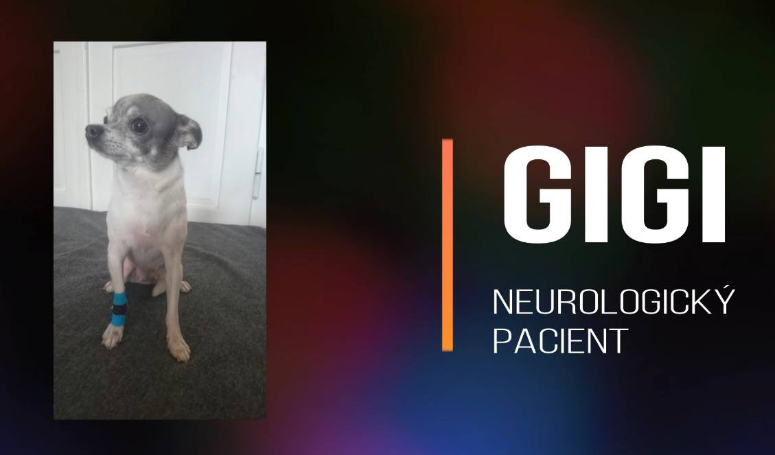 GIGI: Neurologicko ortopedický pacient - rigidní hrudní končetina