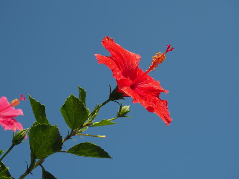 fleurs Bali ©S.Orcel