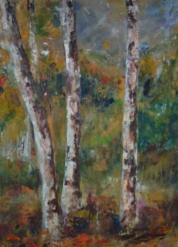 Silver Birches - Summer Light