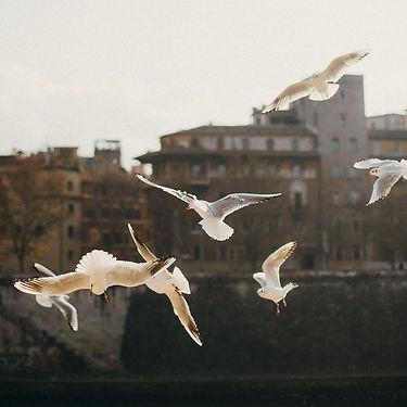 By the Tiber.jpeg