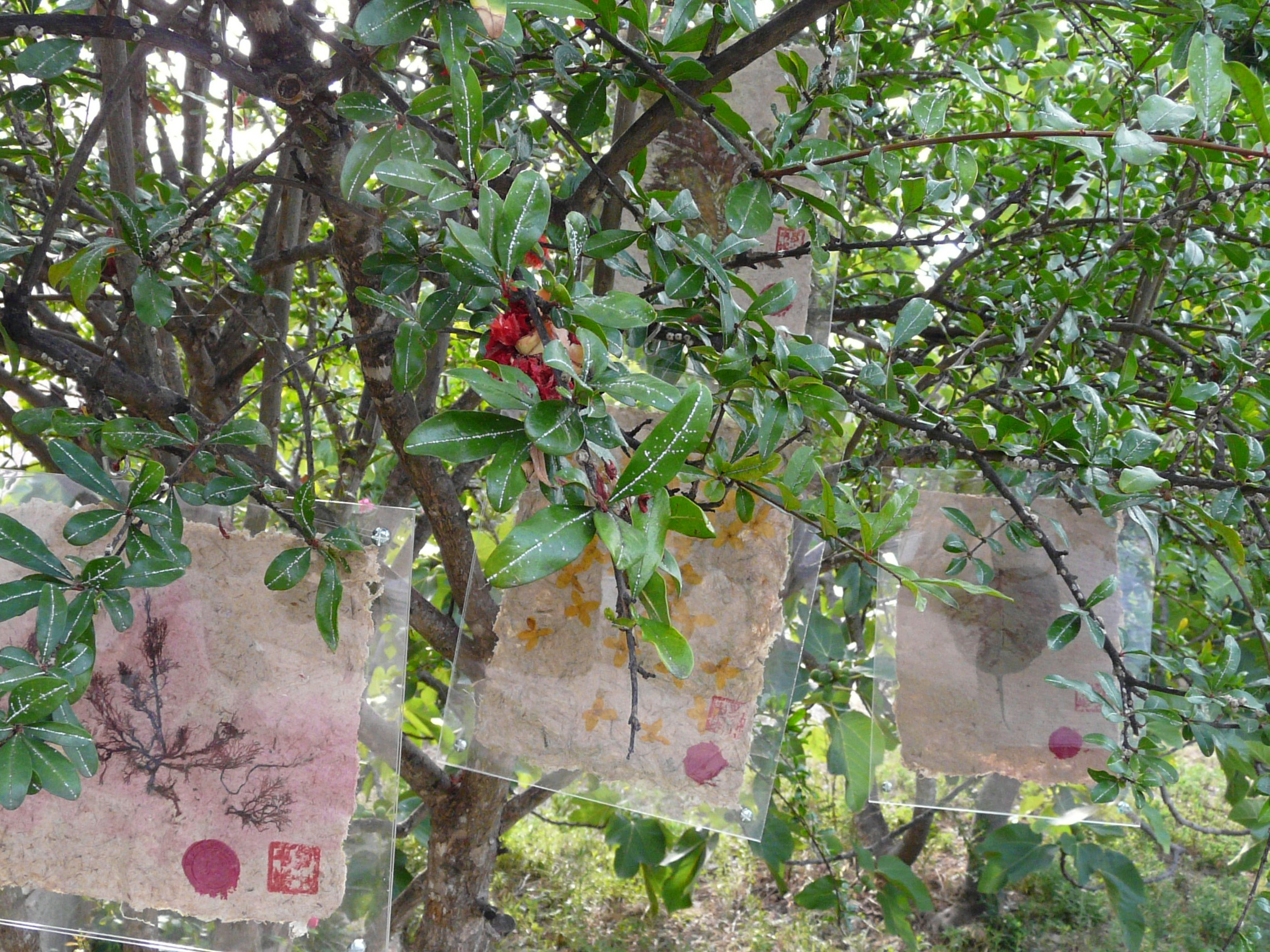Expo Photos dans les arbres