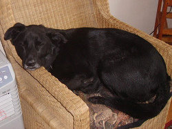 Rollo relaxing on his chair