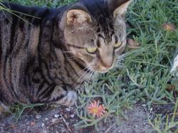 Perky in garden