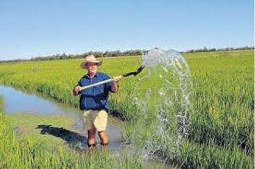 Coleambally Rice Farming