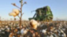 Coleambally Cotton Farming