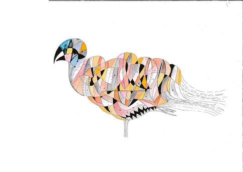 pigeon hautain