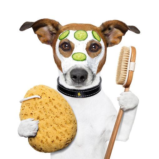 Спа-процедуры для собак, уход за шерстью, шампуникласса LUX