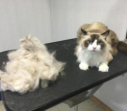 Вычесать кота