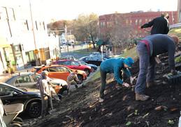 Crafts Avenue planting '18