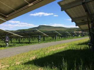 Solar Arrays = Pollinator Sanctuaries?