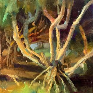Okinawa Tree Grove Color Study_.jpg