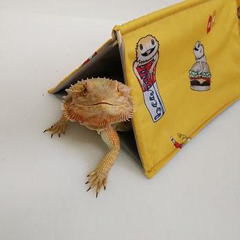 bearded dragon den tent