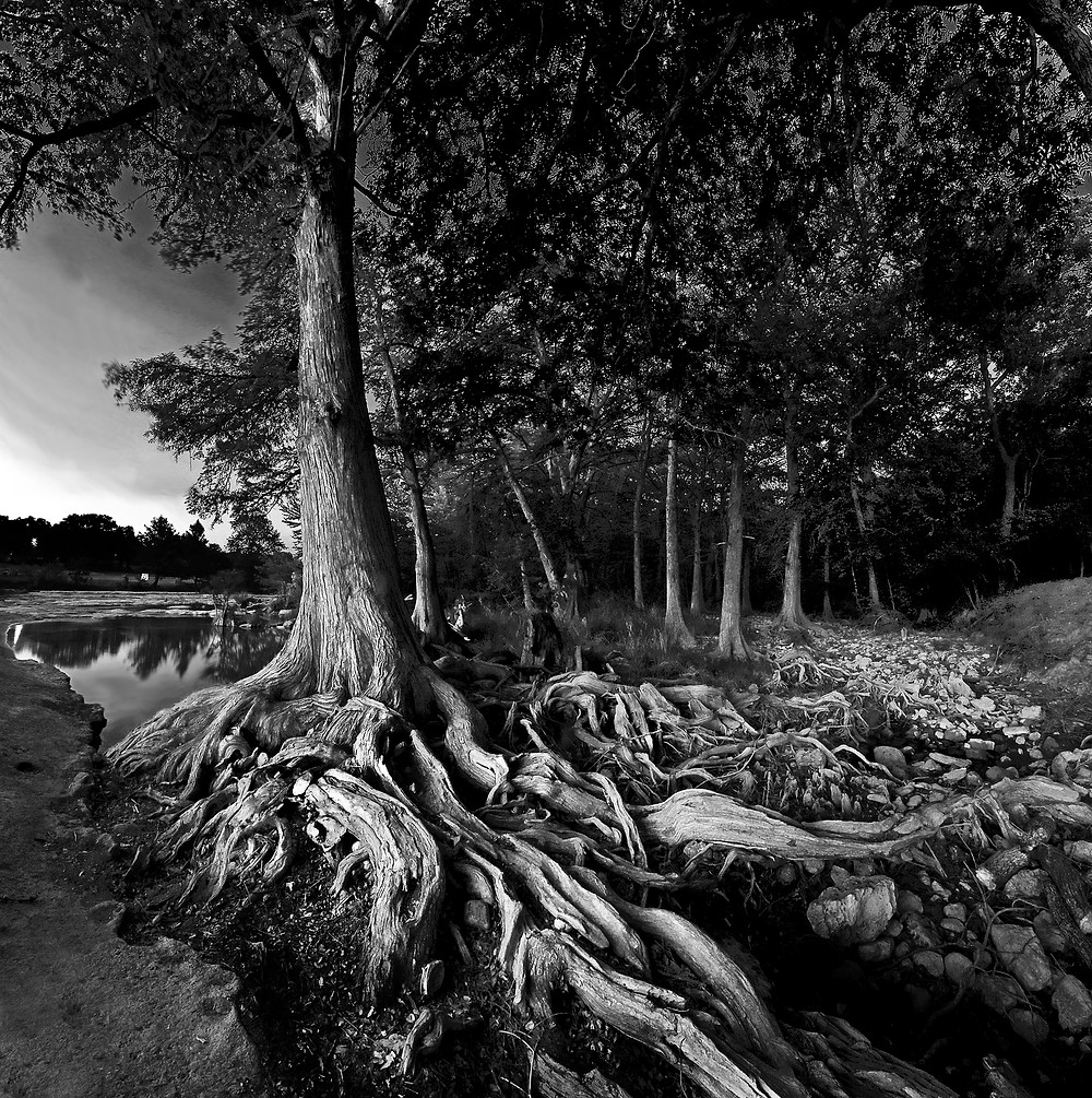 This Limited Edition print of a Cypress tree is along the banks of the Blanco River in Central Texas.