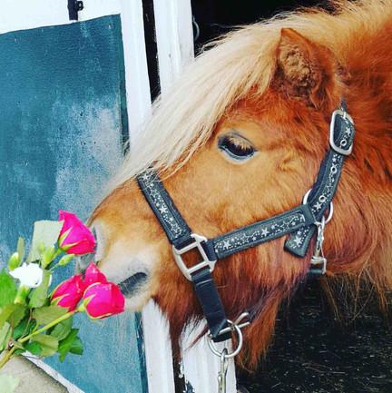 Joey Confetti Pony