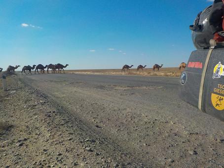 Von Kasachstan nach Usbekistan - Tag 16-21