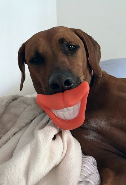 Denture self test