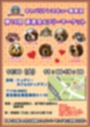 譲渡会ポスター_20191130.jpg