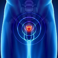 9. Prostate.jpg