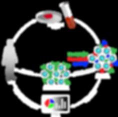 RootPath Diagram