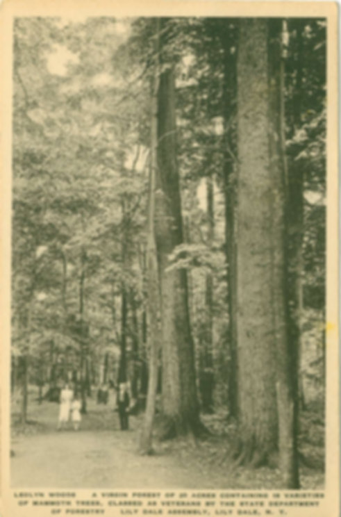 208 Leolyn Woods 1925 A Virgin Forest of
